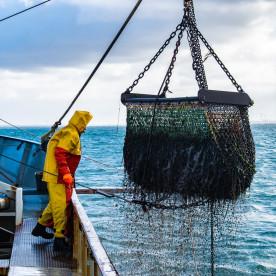 Ekspor Perikanan Yogyakarta Tembus Rp 28 Miliar di Tengah PPKM